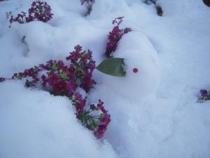 雪うさぎ2 130115143355