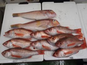 3鮮魚セット1231