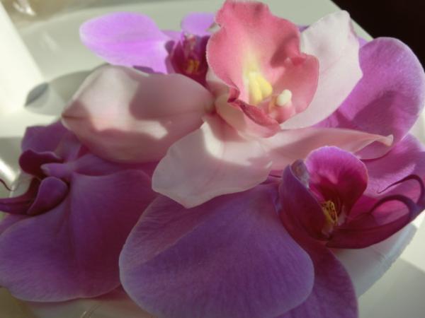 胡蝶蘭 花
