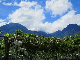 左の黒戸山とブドウ畑
