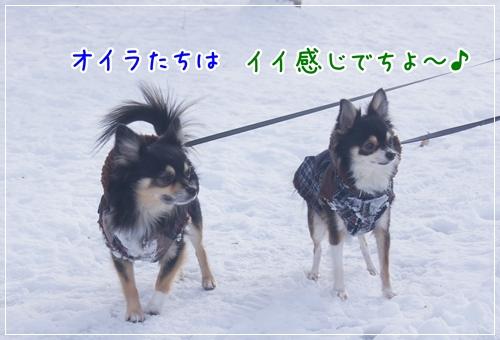 DSC01374-12.jpg