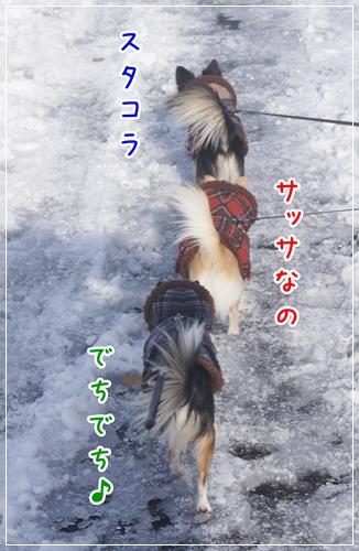DSC01384-12.jpg