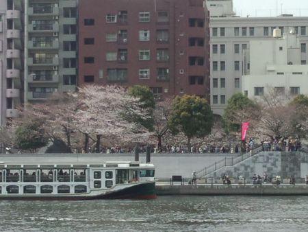 墨田川桜7
