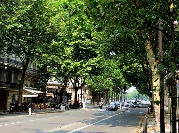 広い通りに並木が午後の影を与えてるREVdownsize