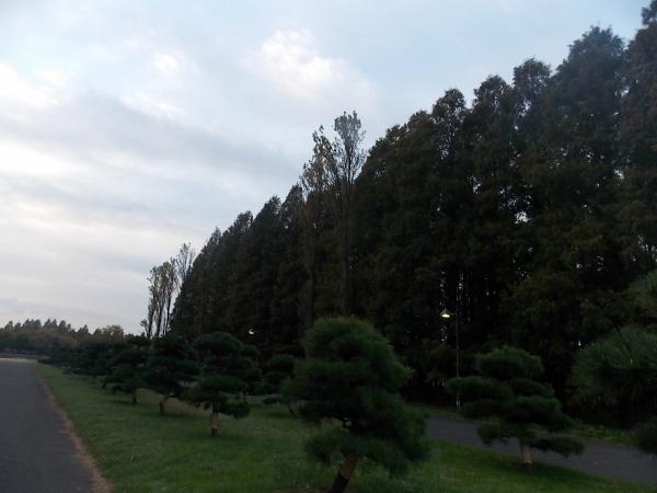 20121121050459638.jpg