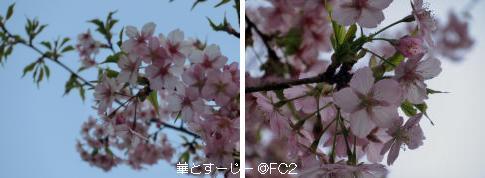 130321_3.jpg
