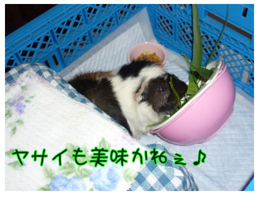 taikibasyo4.png