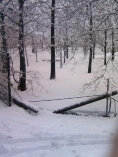 携帯画像大雪