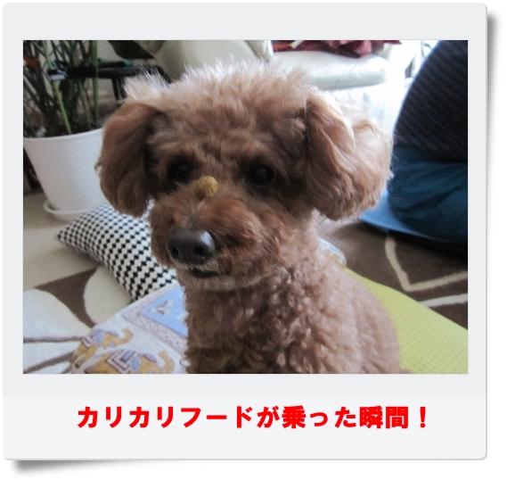 IMG_7341.jpg
