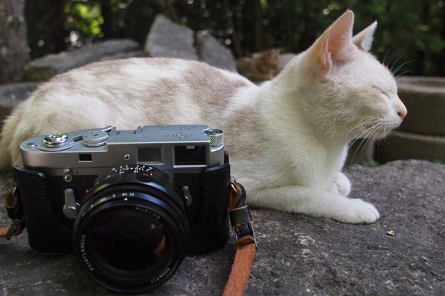 猫とライカM2