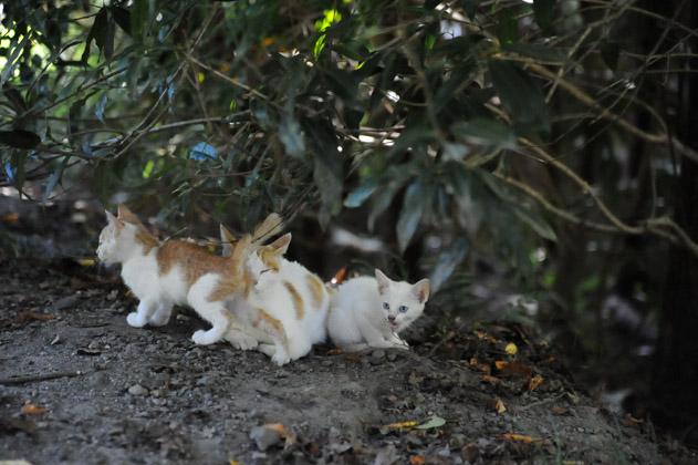 母猫とちびニャン