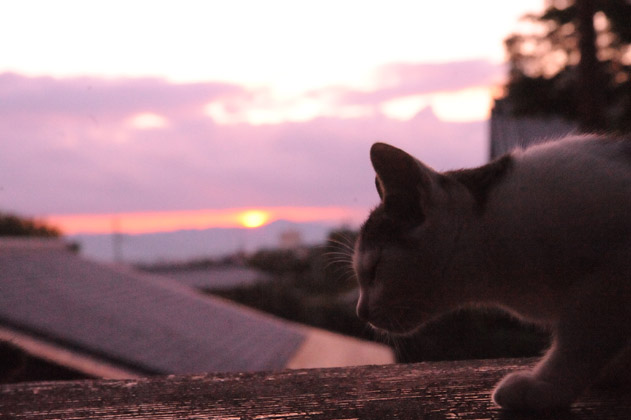 夕陽と仔猫
