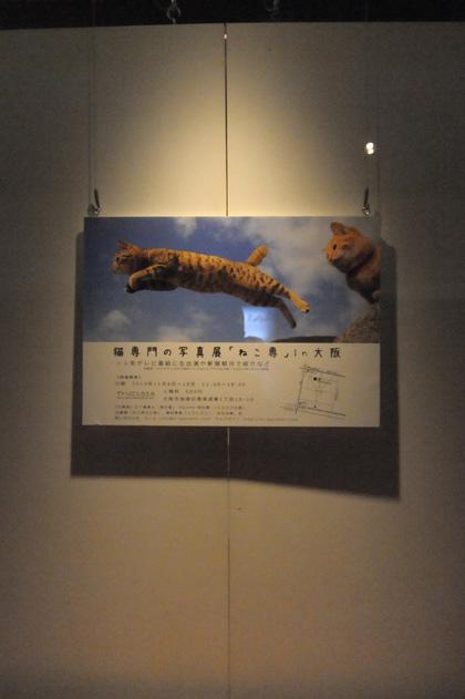 ねこ専ポスター