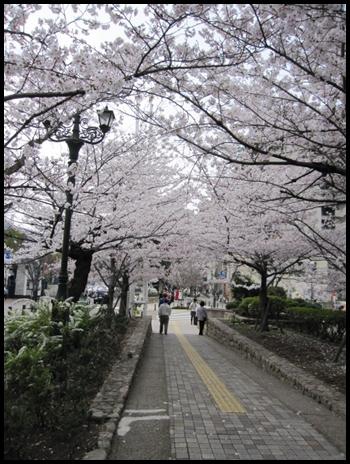 saku8_20130402173618.jpg