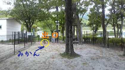 Image9451.jpg