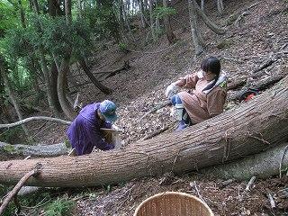 20120519-20生杉 027