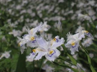 20120526-27生杉 005