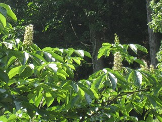 20120526-27生杉 018