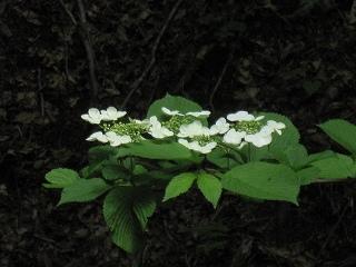 20120526-27生杉 045