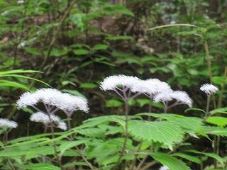 20120623-24生杉 004