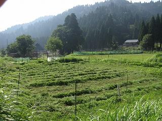 2012078-29生杉 003