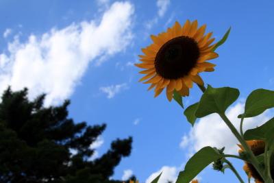 20120825_05.jpg