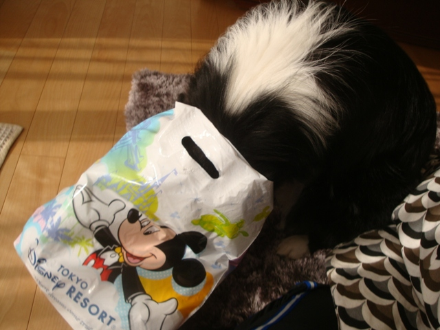 DisneyMiyage01.jpg