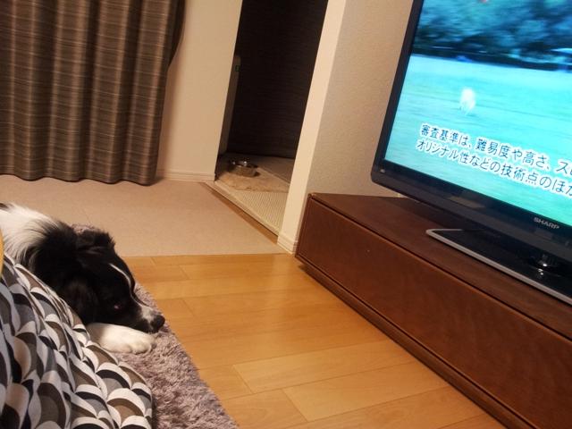 discdog_TV_201303_03.jpg