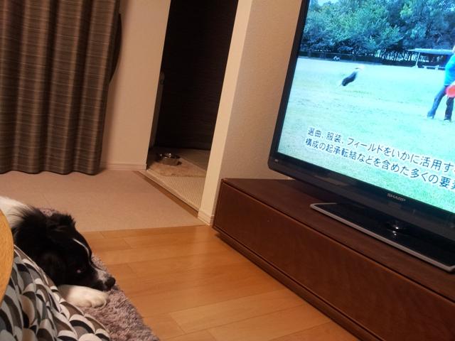 discdog_TV_201303_04.jpg