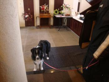 hoteldogrun27.jpg