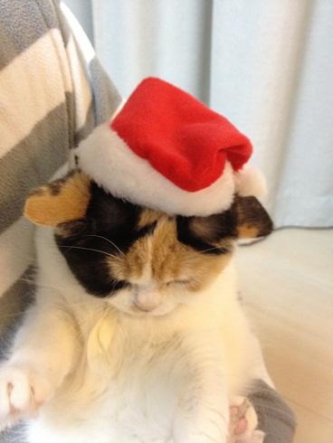クリスマスまめ1