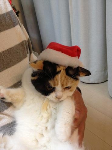 クリスマスまめ2