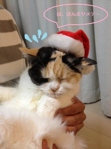 クリスマスまめ3-1