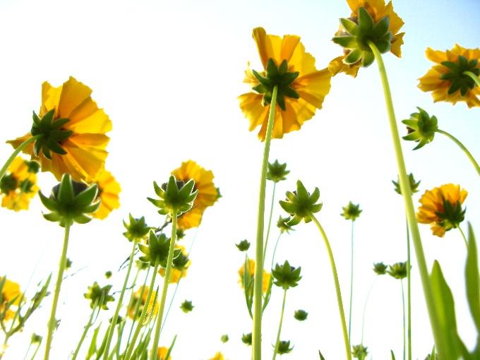 2012-5青空とお花