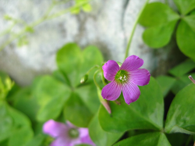2012-6ピンクのお花
