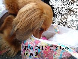 DSC04491.jpg