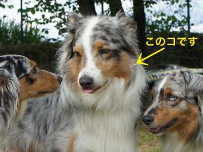 ph_toranosuke2.jpg