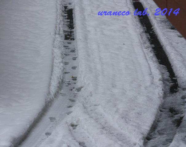 2月9日雪の朝5