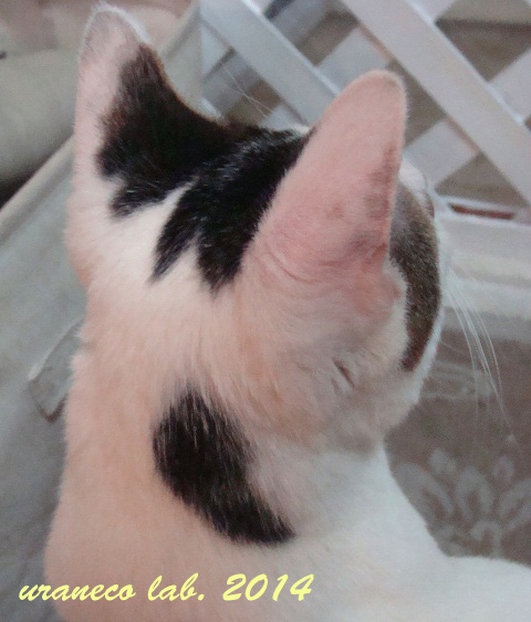 2月10日子猫3