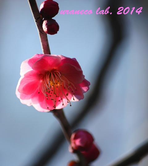 2月13日梅林幻想3