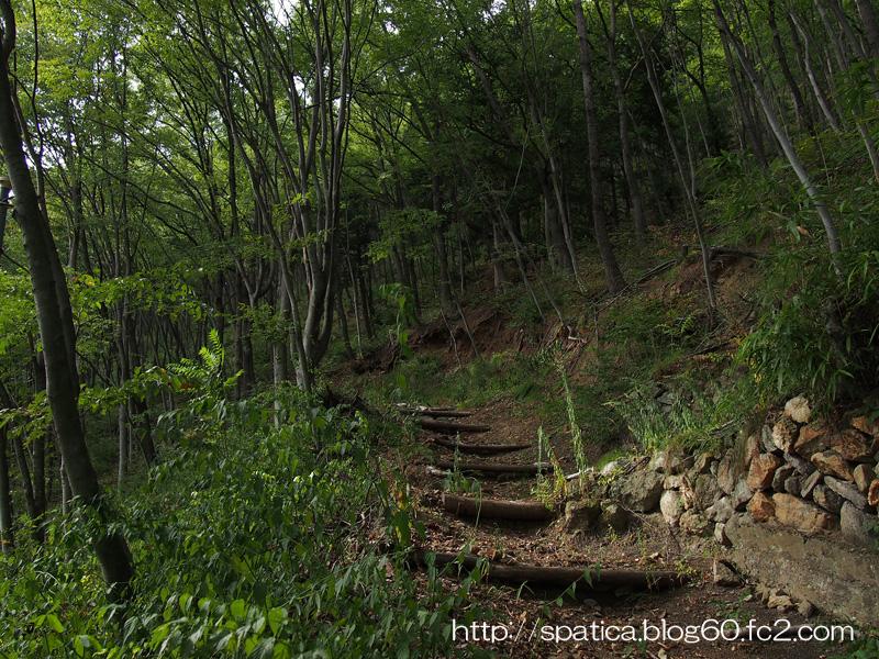 カトカラの森