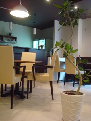 CAFE*観葉植物*
