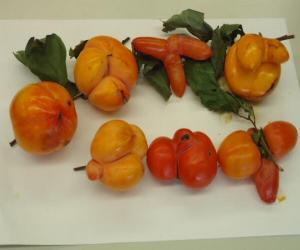大田区蓮沼の柿