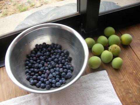果実の収穫(梅は初めて)