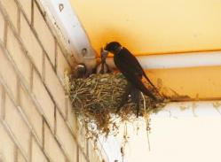 120614swallows.jpg