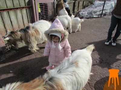 動物公園3