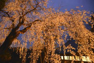 130330_yozakura_06w.jpg