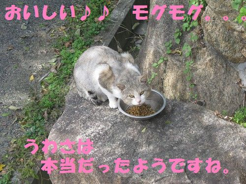 008_20121104165356.jpg