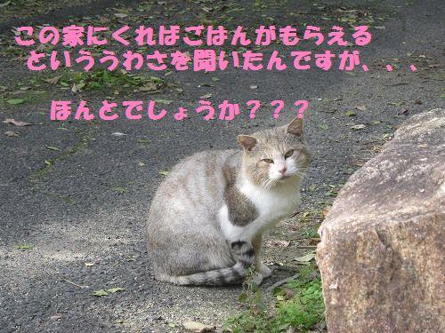 014_20121104161832.jpg