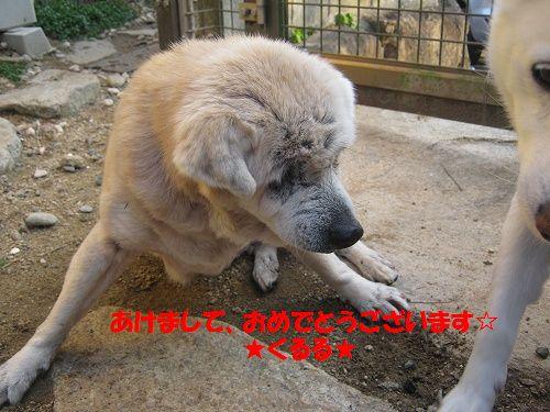 104_20130101175703.jpg
